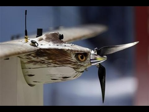 Surveillance Drones Disguised As Birds May Be New Threat To Privacy