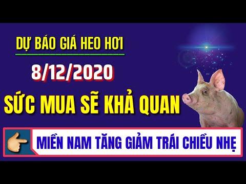 Giá heo hơi ngày 8/12/2020 | Dự báo giá lợn hơi tăng giảm trái chiều tại miền Nam