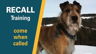 Recall Training | Teach a dog to come when called  | Full obedience tutorial with SIT PRESENT