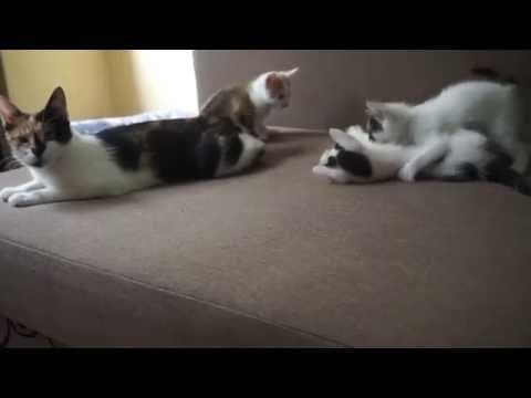 Вопрос: Почему в Беларуси много бездомных котят?