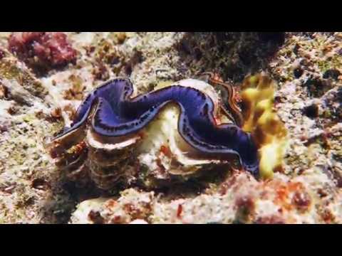 ras mohammed shark yolanda reef 19 04 2018 youtube