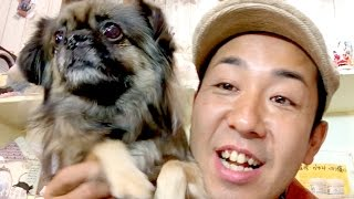 番組提供:ペットライン株式会社(http://www.petline.co.jp/) チベタ...