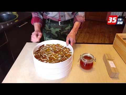 Рецепты из ревеня