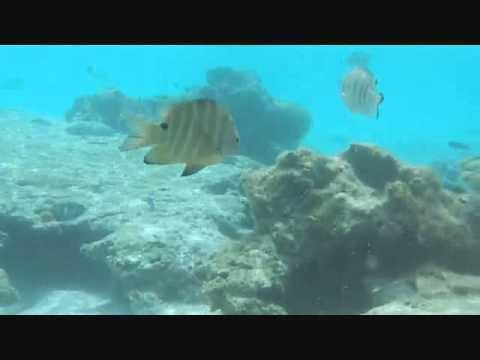 NEW CALEDONIA VIDEOo.wmv