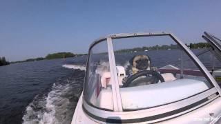Pug Drives A Boat