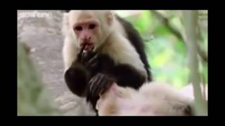 Amazing!! Animal in the jungle - VERY FUNNY ANIMALS  2019 HD