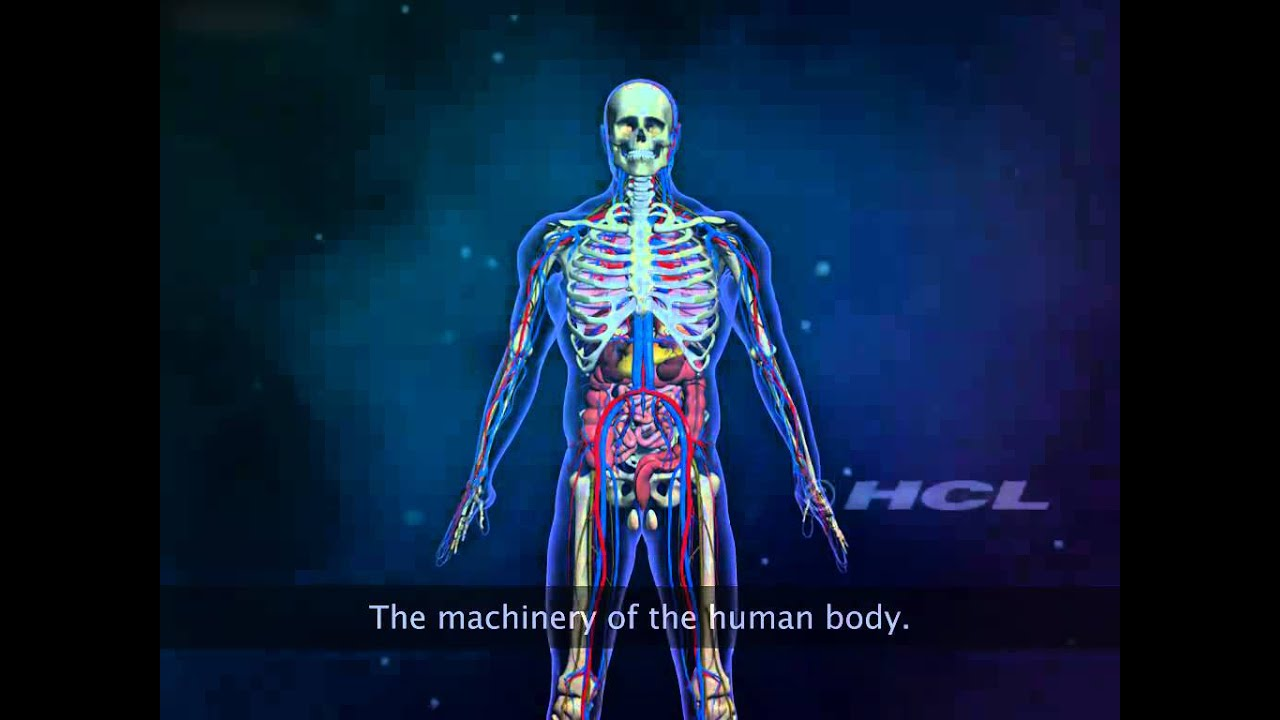 The Organ Systems Of The Human Body Youtube