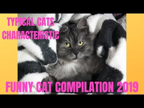 Typical cats characteristic | Funny cat compilation 2019