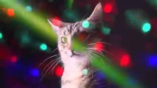 Disco Dancing Cats