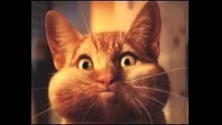 śmieszne koty #1