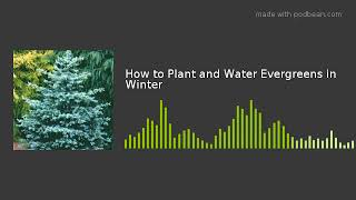 How to Plant and Water Evergreens in Winter