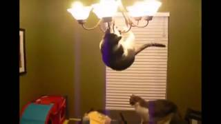 Супер кот ! захват люстры!
