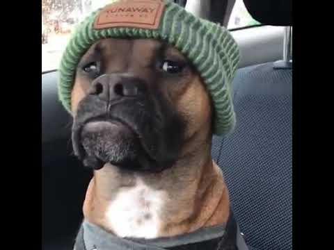Dog In A Beanie Hat 🐶 - YouTube ed4b4098f39