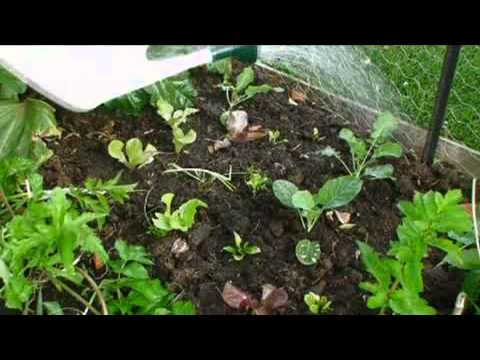 clickbank259: The Secret to the Easiest Way to Grow Fresh Organic Vegetables in your Veggie Garden w