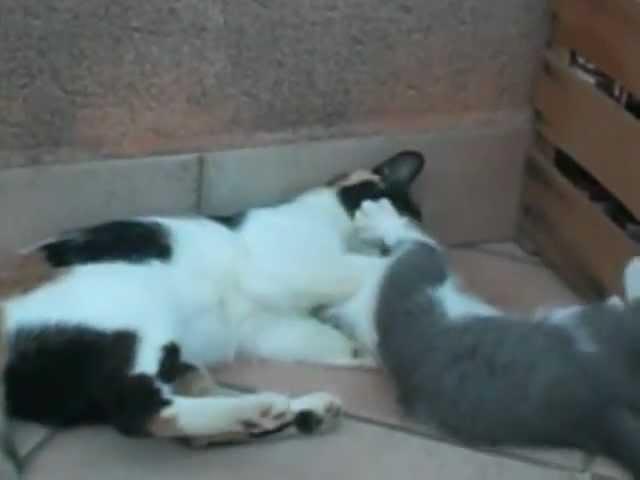 Micia e Gigetto