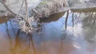 Стоянки щуки на малой реке(микро-речке)(Локализация щуки на малых реках. Точки засады и стоянки щуки в микроречке. Перспективные места реки и пойме..., 2014-04-29T15:45:03.000Z)