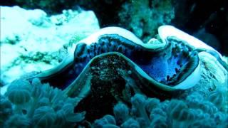 Abenteuer im Roten Meer, Marsa Shagra, Tauchen am Riff
