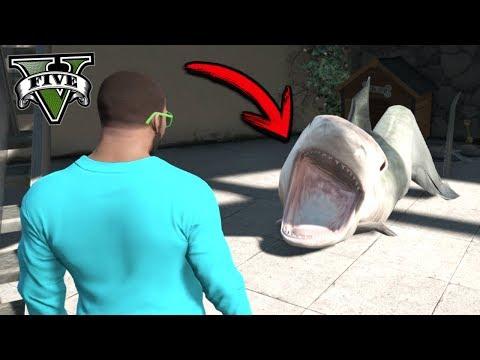¿Qué pasa si Chop se hace tiburón? - GTA 5