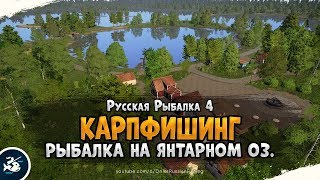 Карпфишинг Янтарное озеро Русская Рыбалка 4