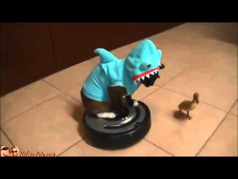 Chat D 233 Guis 233 En Requin Sur Un Aspirateur Poursuit Un
