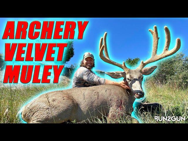 Archery Velvet Mule Deer-4 Yard Stalk--Run2Gun Season 8