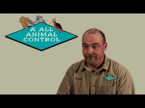 wildlife-management-careers---wildlife-biologist-careers