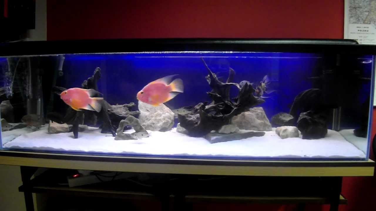 moje 300 litrowe akwarium my 300 liter aquarium youtube. Black Bedroom Furniture Sets. Home Design Ideas