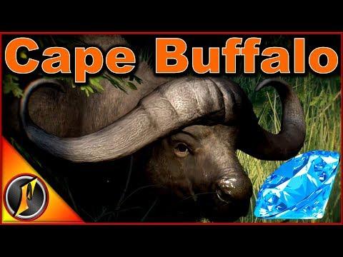 Diamond Cape Buffalo!?! | theHunter Call of the Wild 2018