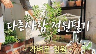다정털quot다른 사람 정원 털기quot 1편 가벼운정…