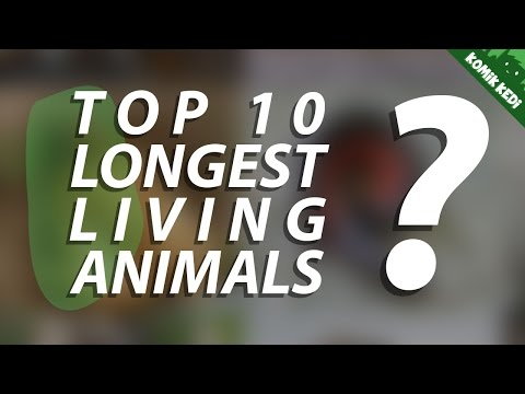 Top 10 Longest Living Animals