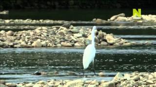 История жизни белой цапли HD 720p