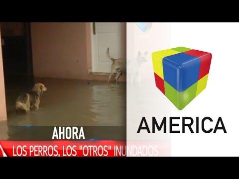 Los perros, otro drama de las inundaciones