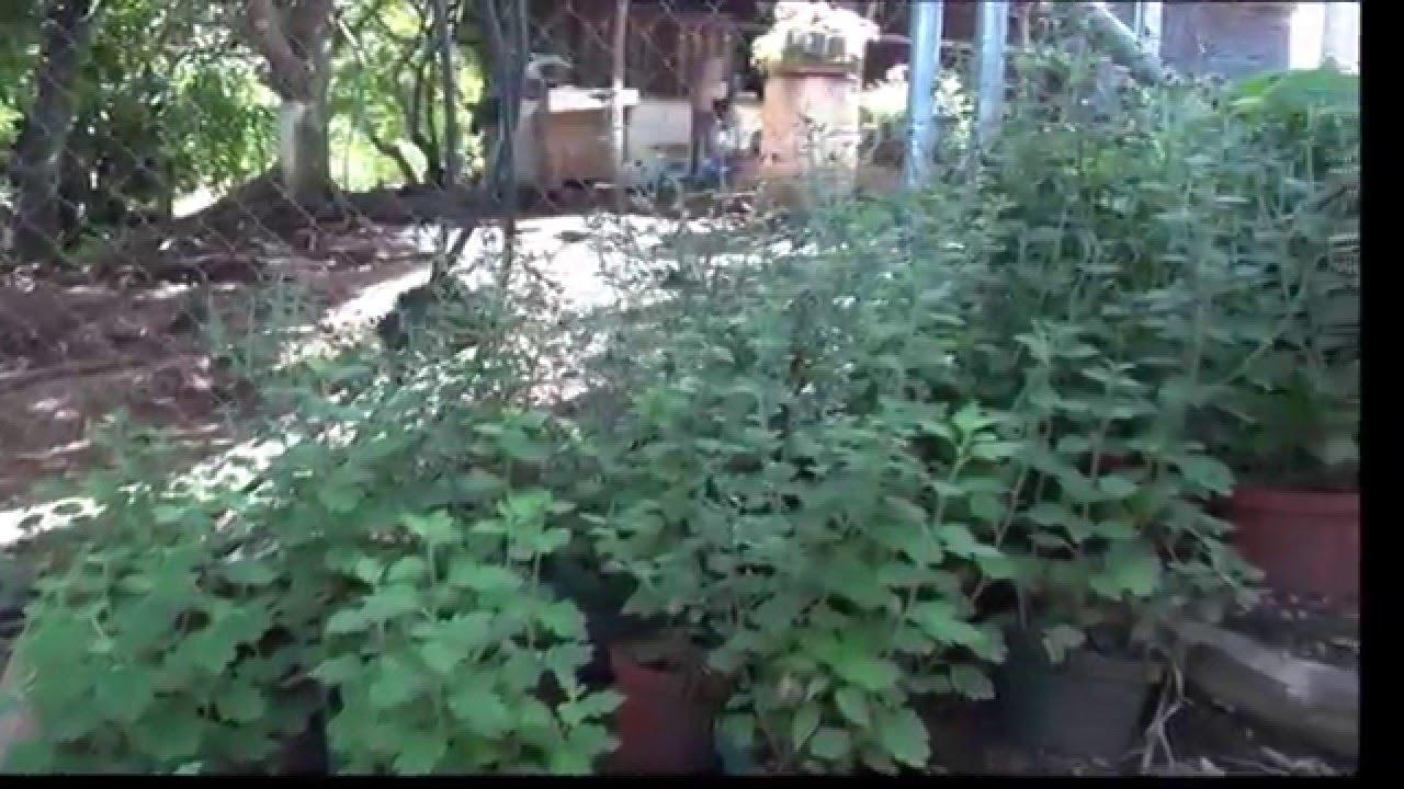 Vivero de produccion de plantas ornamentales y frutales for Produccion de plantas ornamentales