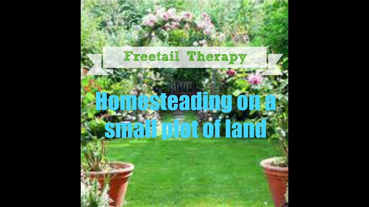 homesteading with a small plot of land youtube