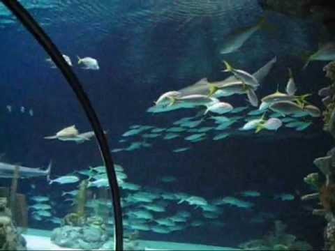 Shark Tunnel and Aquarium at Omaha Zoo, Nebraska
