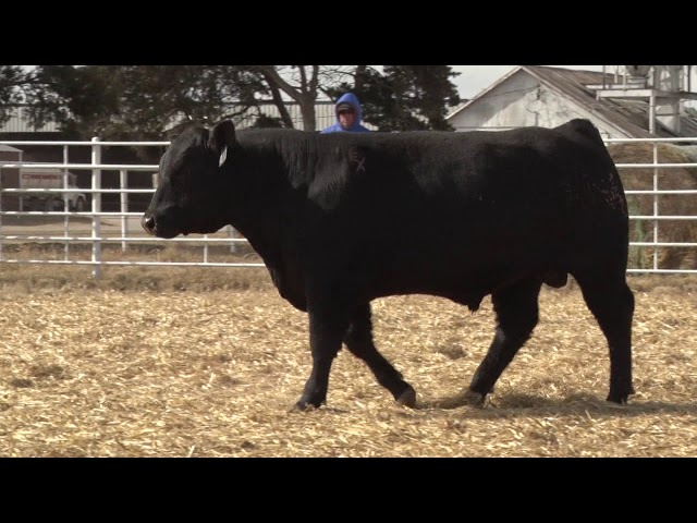 Express Ranches Lot 477