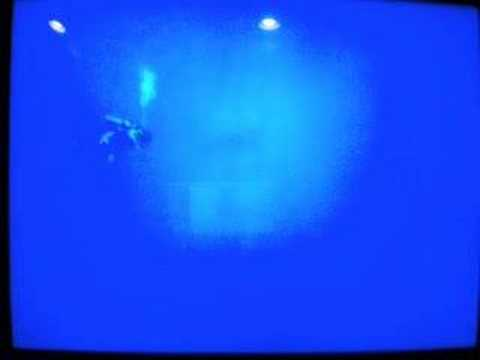 endless ocean sperm whale