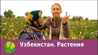 Узбекистан. Растения   Живые символы планеты   Живая Планета