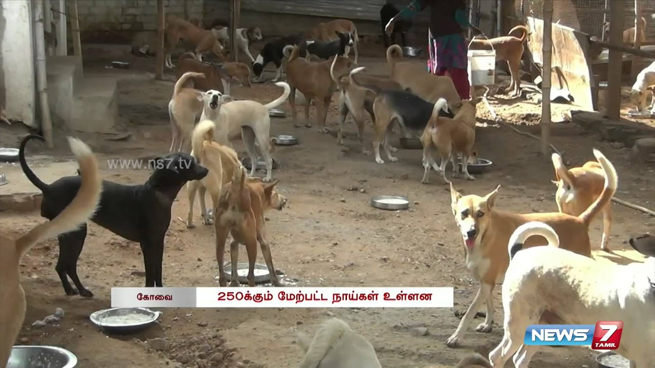 Single woman takes care of 250 dogs at Kovai | Tamil Nadu ...