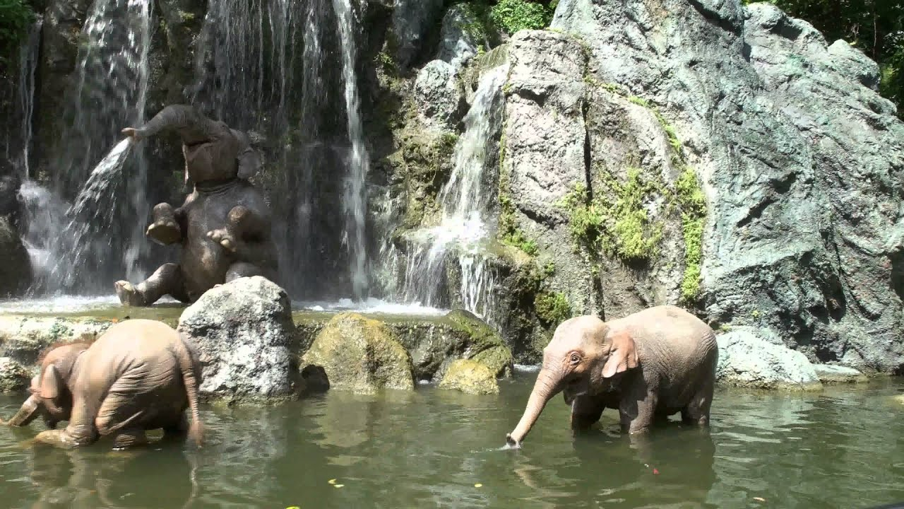 Disney World 4k Uhd Jungle Cruise Samsung Nx1 2160p Youtube