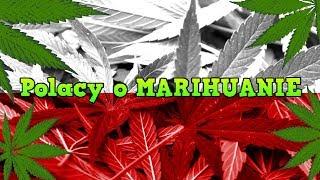 Polacy o Marihuanie Najlepsze Wypowiedzi(Politycy,Muzycy,Aktorzy,Znani)