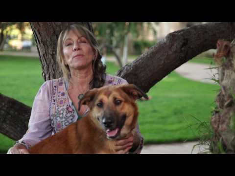 FosterFurkids with Alison Eastwood