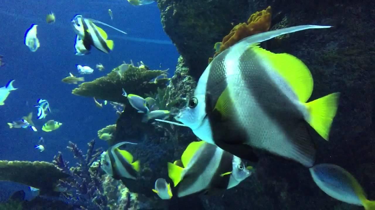 Fish aquarium in sentosa - Southeast Asian S E A Aquarium Resorts World Sentosa Sentosa Island Singapore