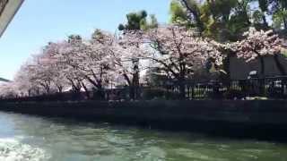 2015.4.2 落語家と行くなにわ探検クルーズ桜スペシャル 大川の桜が満開
