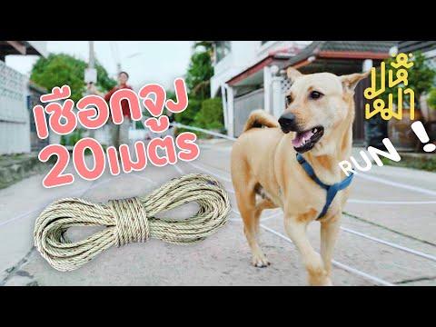 (EN) ปล่อยหมาวิ่ง ! ด้วยเชือกจูง 20 เมตร  มหึหมา EP109