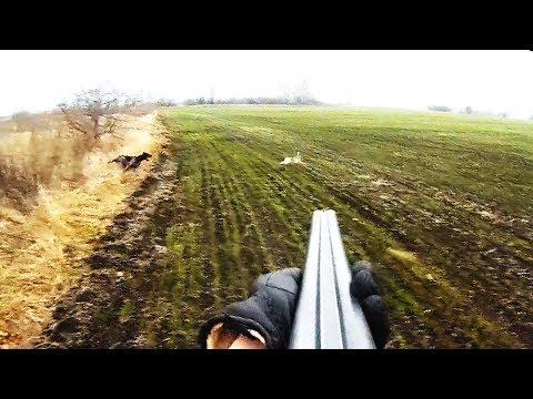 Удивление собаки когда заяц в метре - Охота на зайца / Hare Hunting