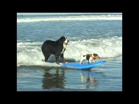 Nani Surfing