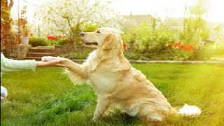 How to Teach a Dog to Shake Hands