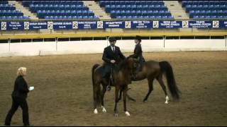 Perfect Storm CSH, Arabian Country English Pleasure Junior Horse, 2012 AHA Region 8 Championships