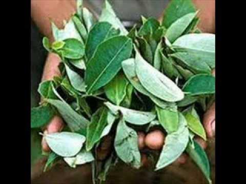 Растения содержащие наркотические вещества